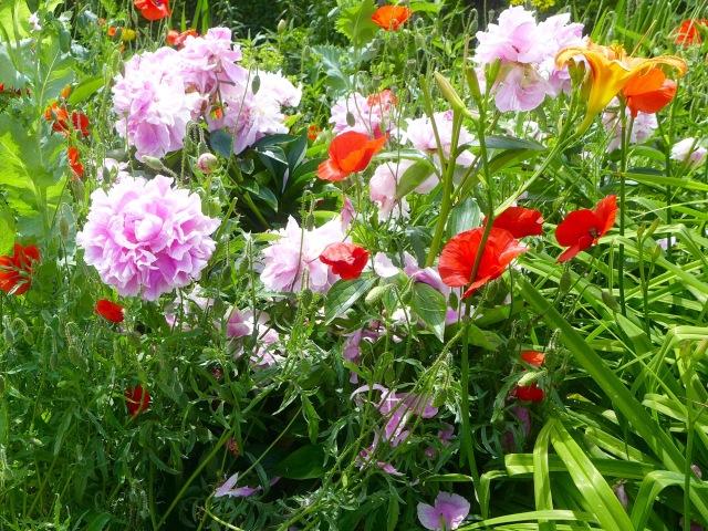 Poppies Giverny Money